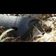 Набор Gerber Gator Combo Axe 2 22-41420